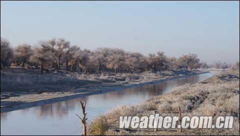内蒙古额济纳旗胡杨林景区出现雾凇景观